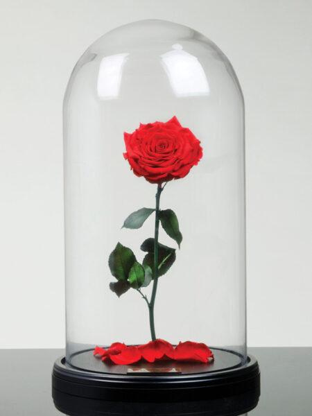 Eternal Roses Timeless Amp Treasured Real Roses