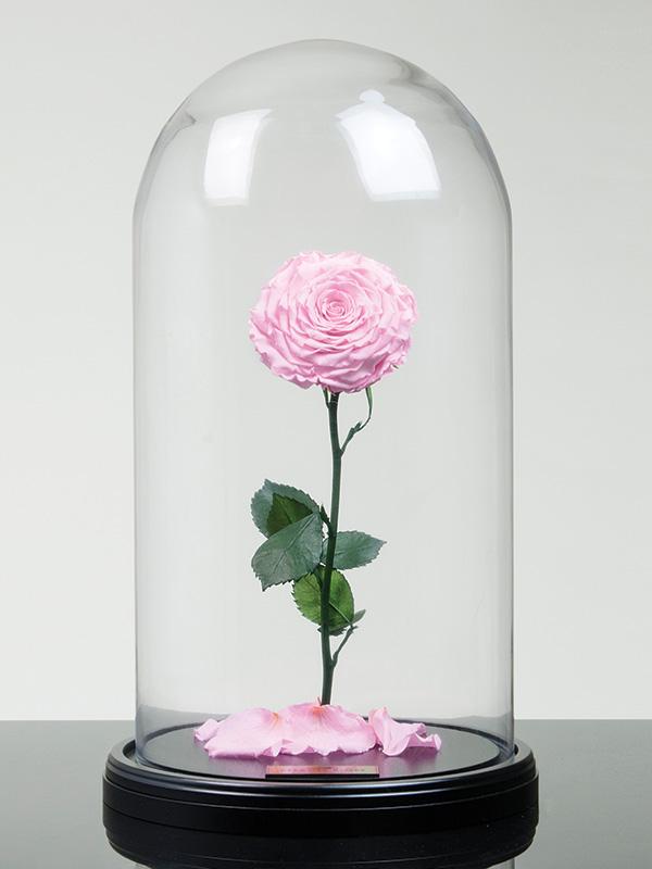 The Grande Rose – Baby Pink – Eternal Roses